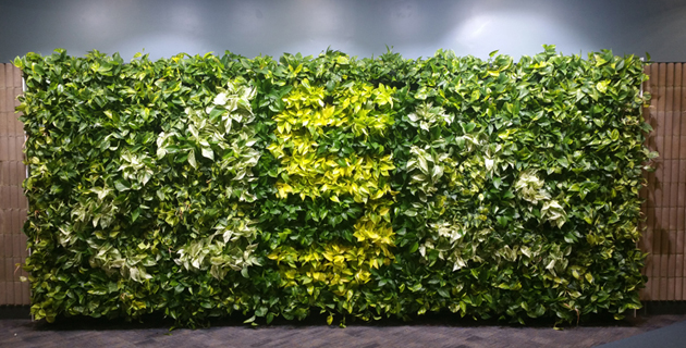 Living Green Wall Vertical Plant Trays / Sub Irrigation Automatic Plant  Watering